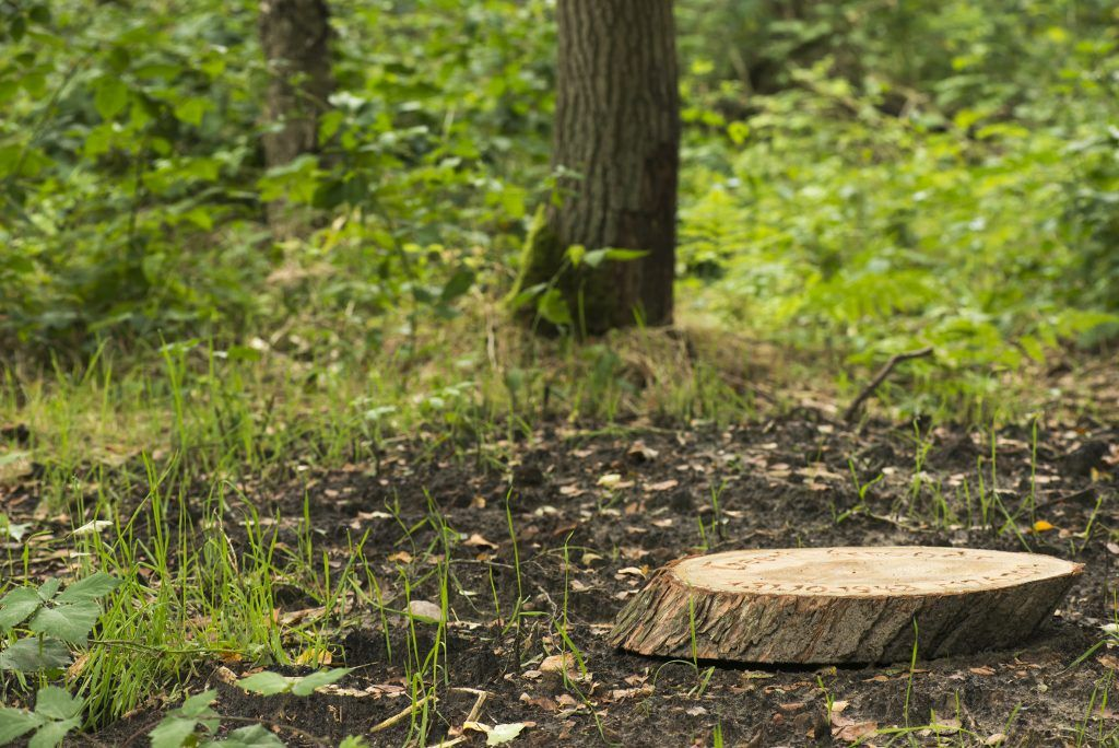 Informatie natuurbegraven en Natuurbegraafplaats Zomerlanden Heinenoord
